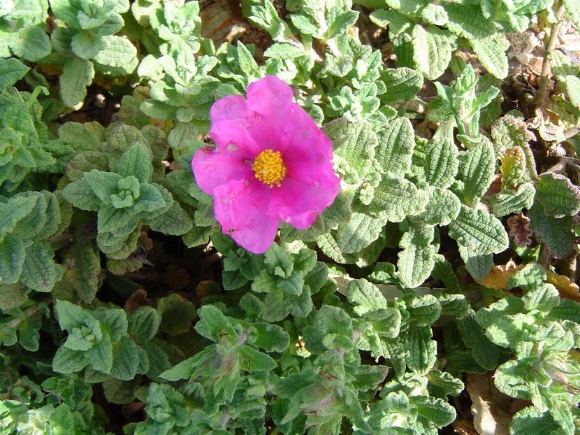 flor rosa que aparece entre varias plantas