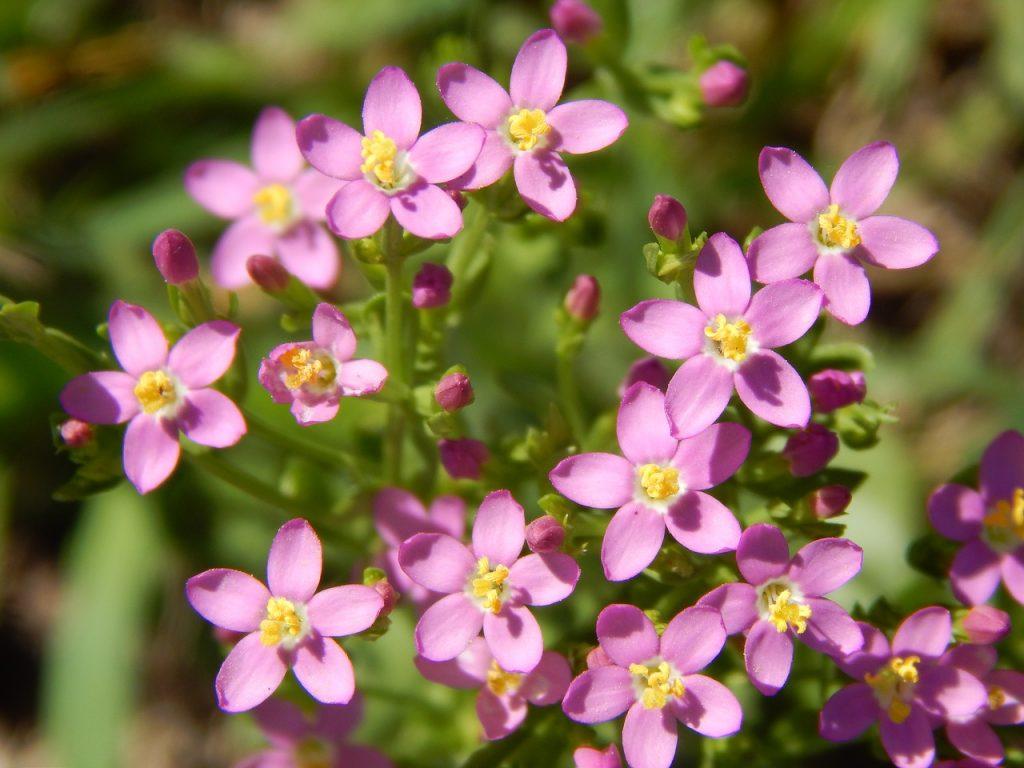 Las flores son muy decorativas