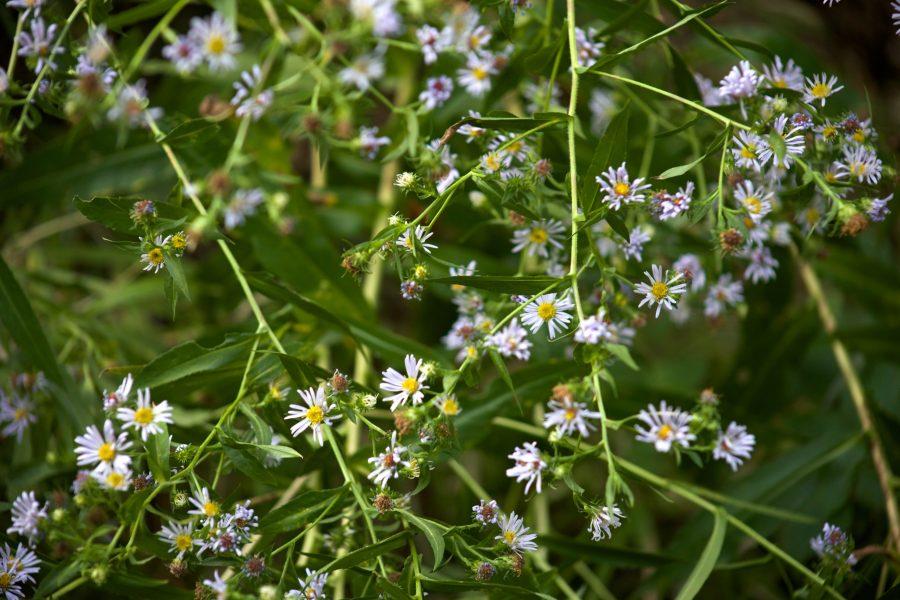 Las flores pequeñas se pueden tener en macetas