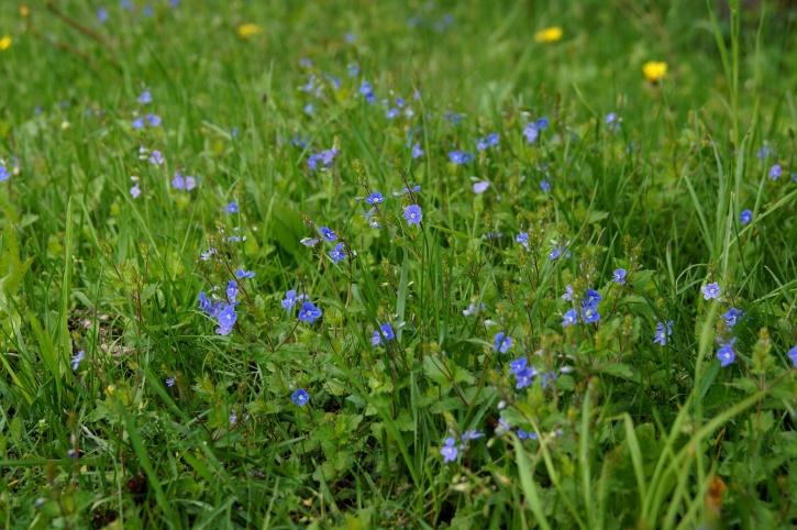Flores silvestres para jardines rústicos