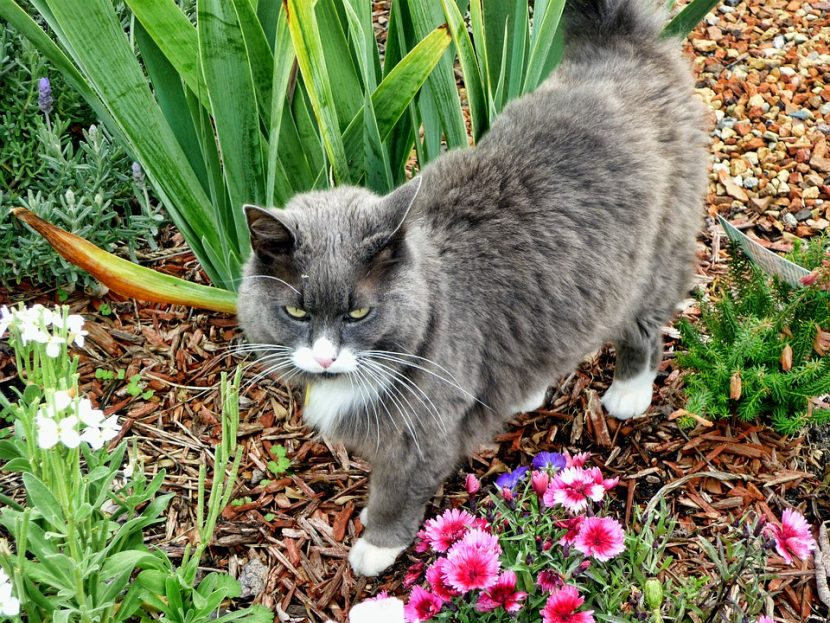 Los animales pueden divertirse en el jardín