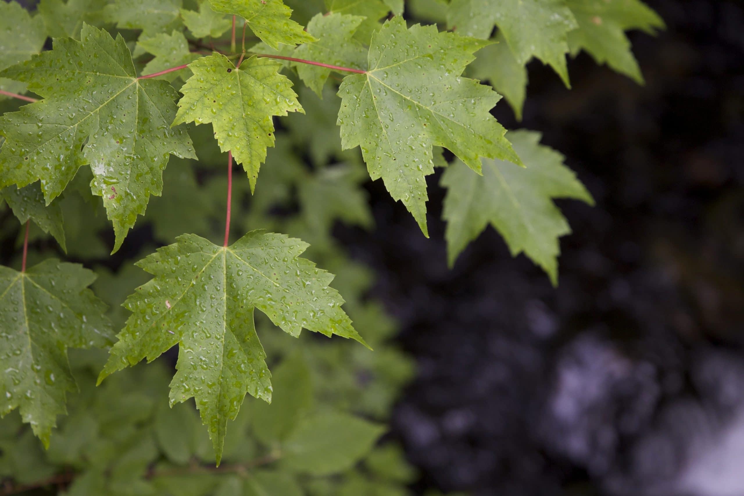 La lluvia puede traer problemas a las plantas