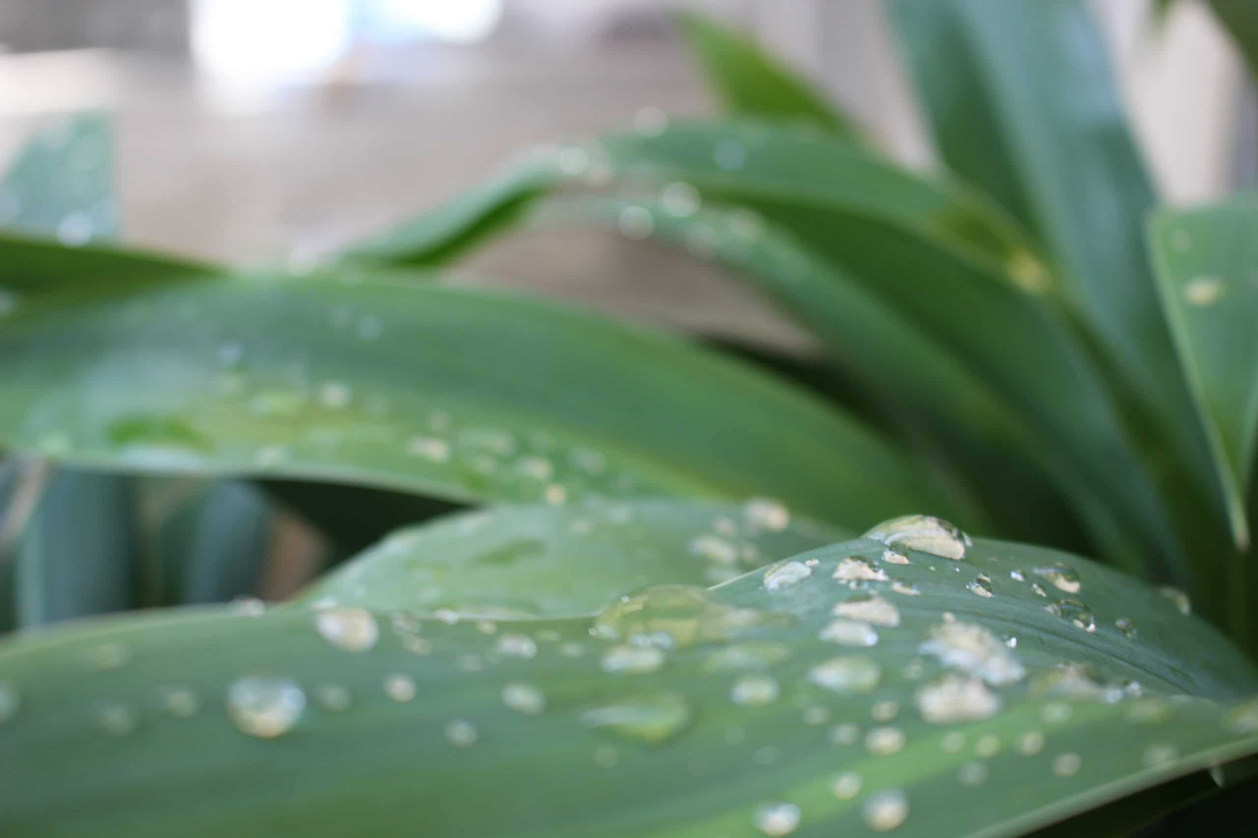 Los microorganismos pueden dañar a las plantas