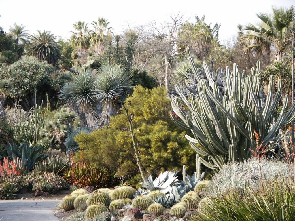 El jardín de cactus es un xerojardín