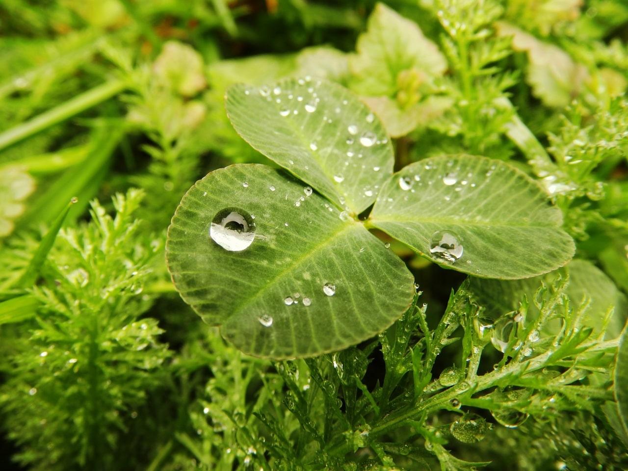 Las plantas necesitan agua, pero la lluvia puede causarle problemas