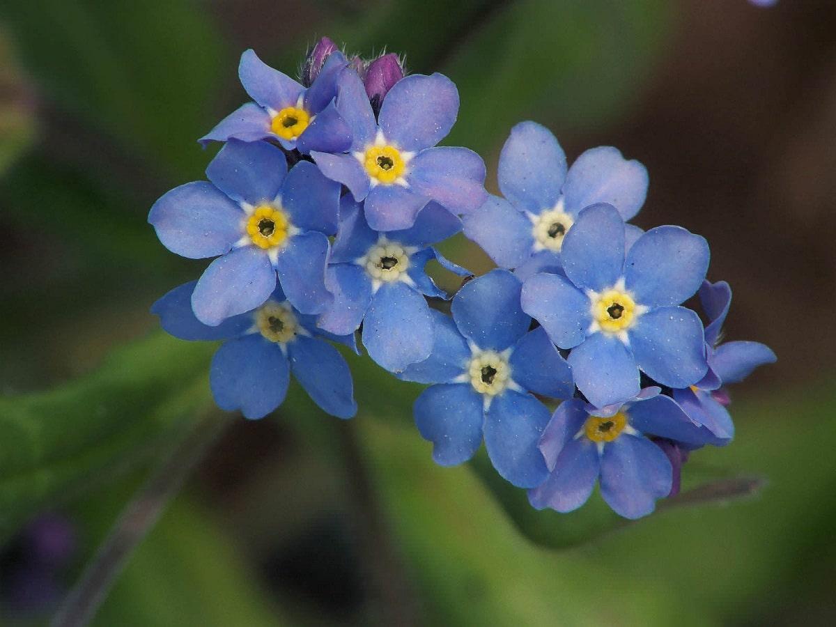 ramo de flores color azulado o morado