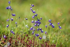 Las utricularia son plantas carnívoras