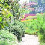 Haz un camino con plantas