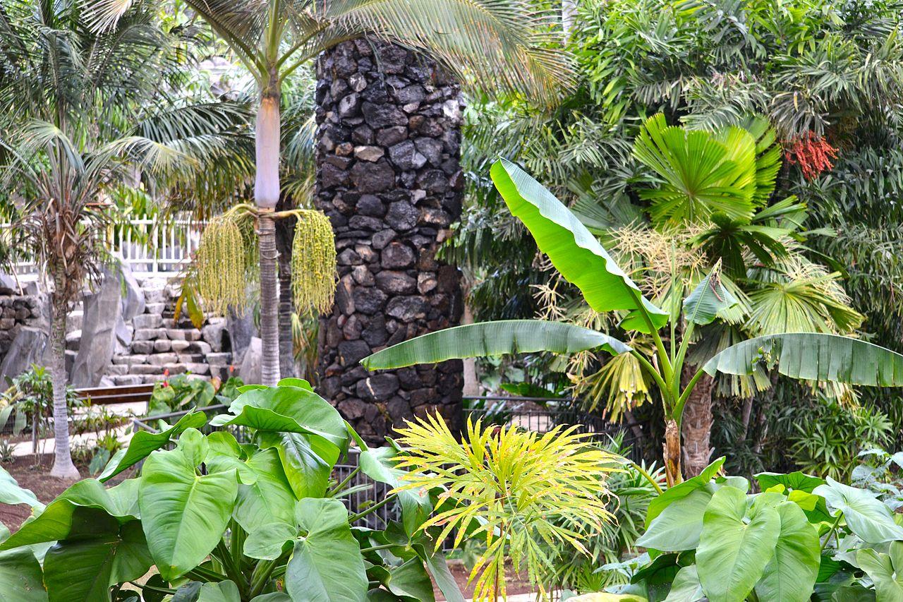 Vista de las plantas de un rincón del Palmetum
