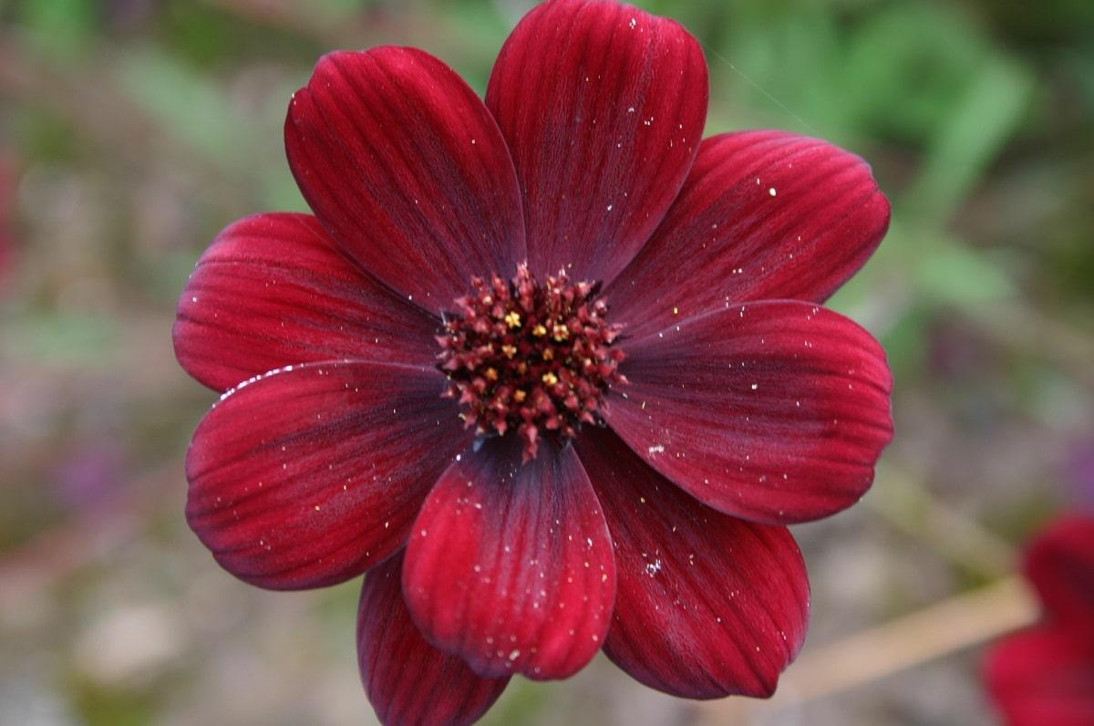 flore de cerca de color rojo