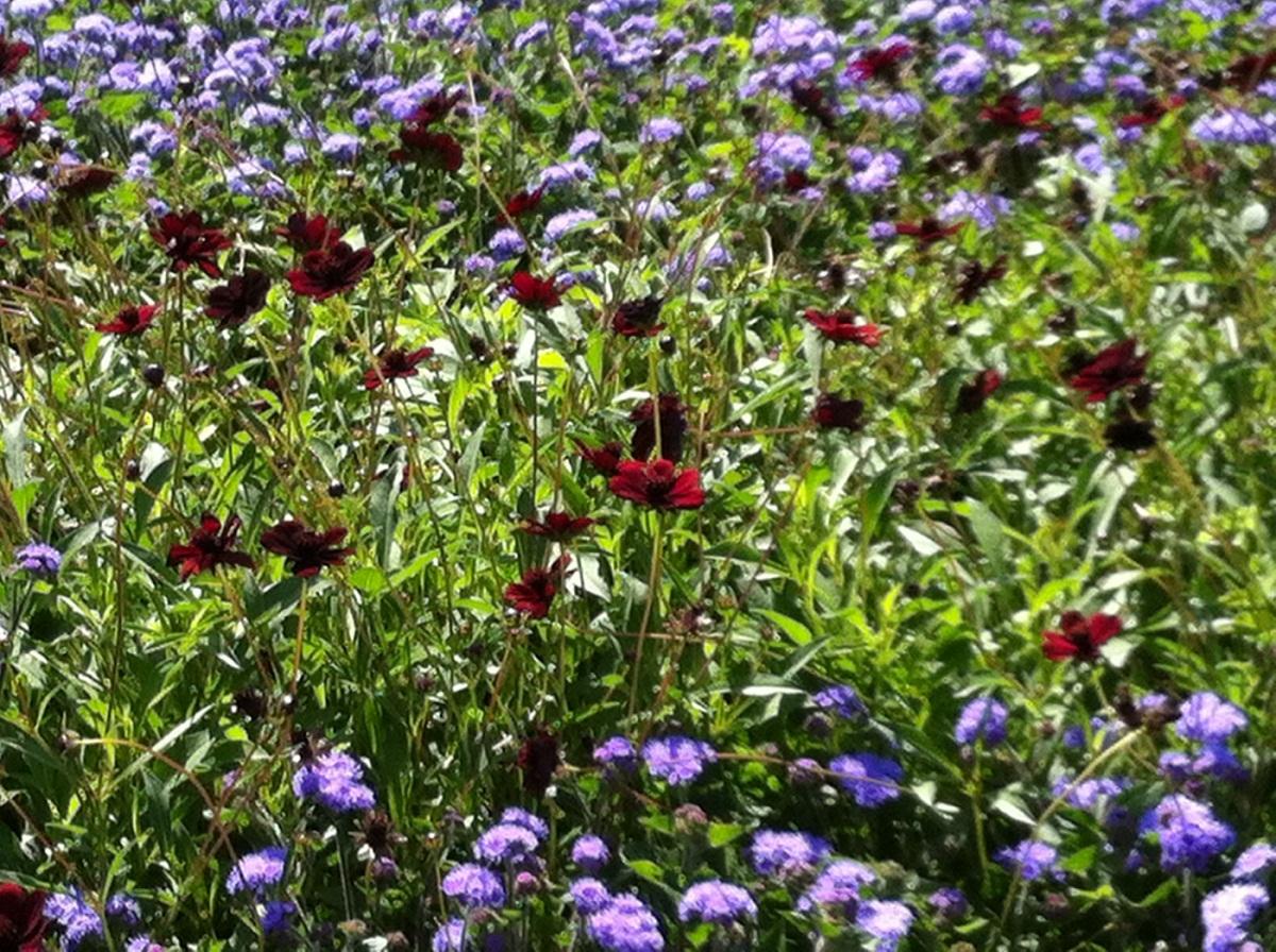 flores rojas con flores de color lila en un campo