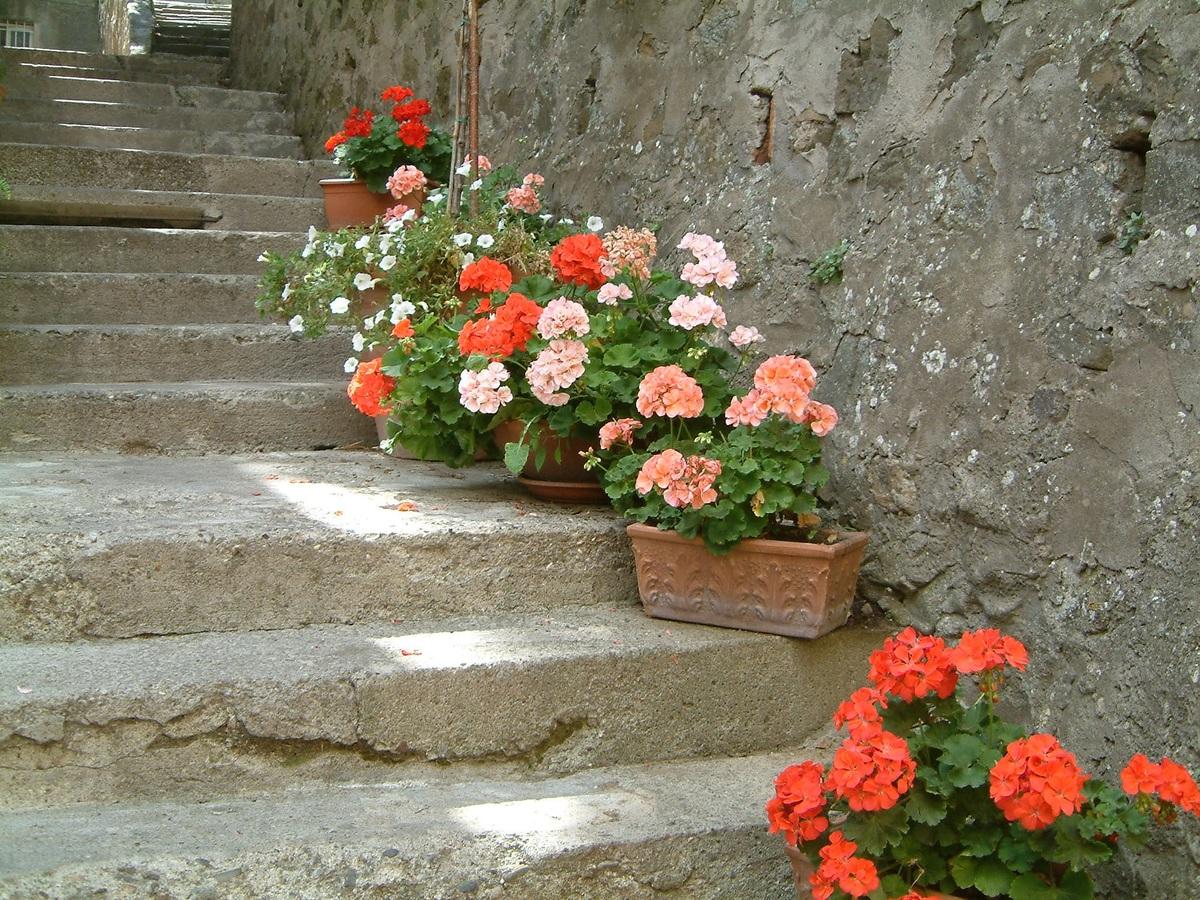 Pon macetas en la escalera