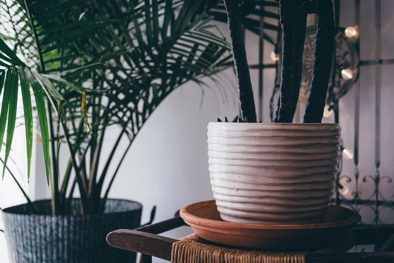 Hay palmeras que pueden estar en interior