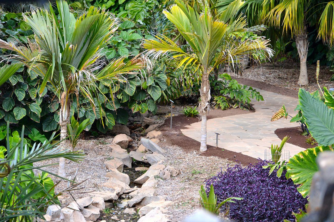 Colección del Palmetum de Tenerife