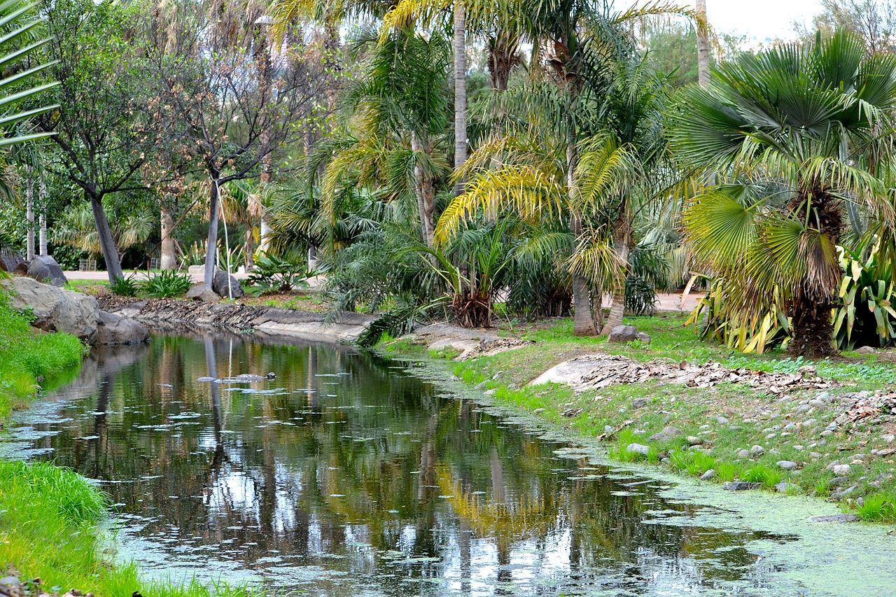 Vista de un rincón del Palmetum
