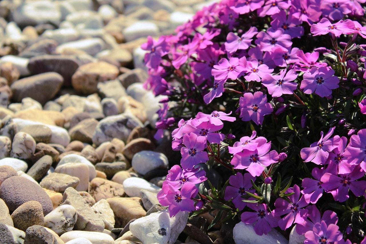 Escoge plantas que resistan tu clima