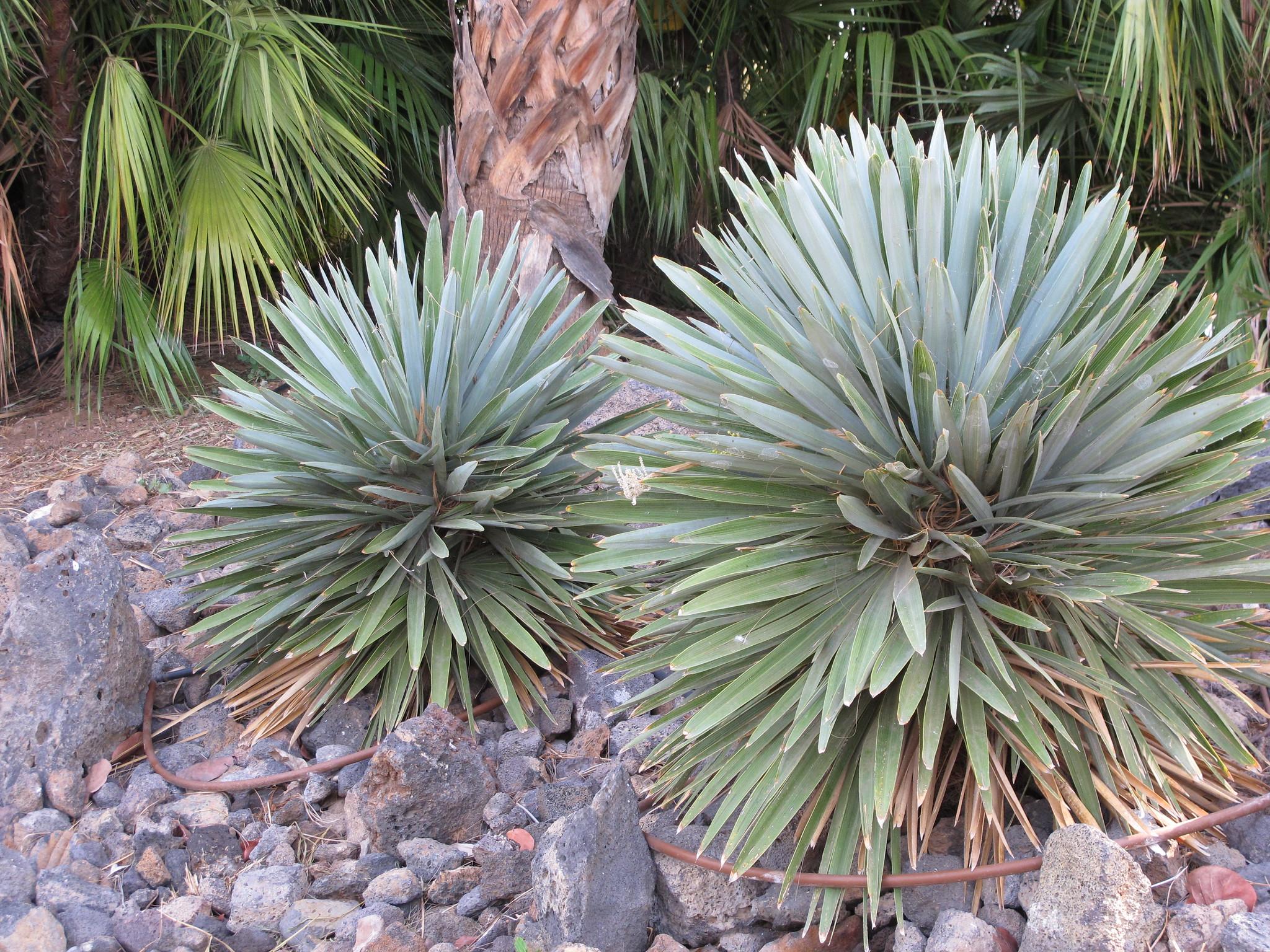 Vista de plantas del Palmetum