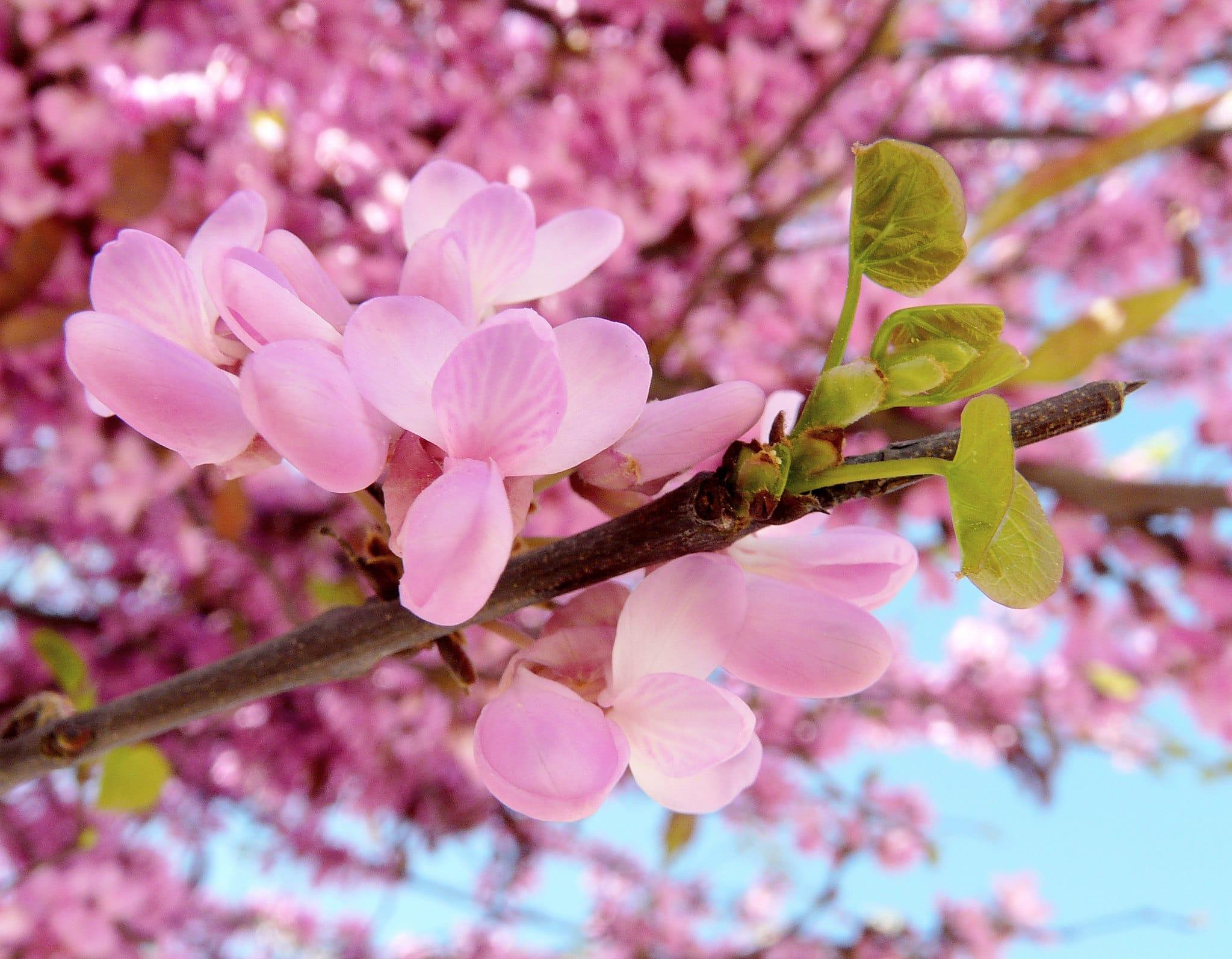 Vista de las flores del árbol del amor