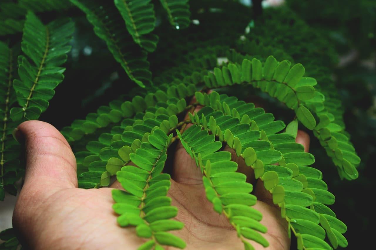 Las plantas que compramos necesitan que las cuidemos