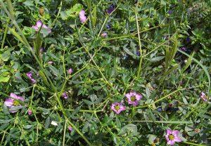 arbusto con florecillas de color lila