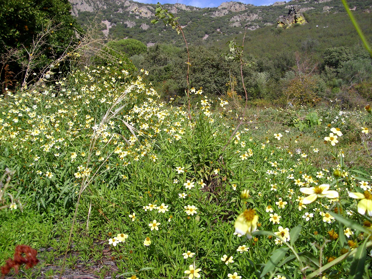 campo lleno de pequenas flores de coolores amarillas y blancas