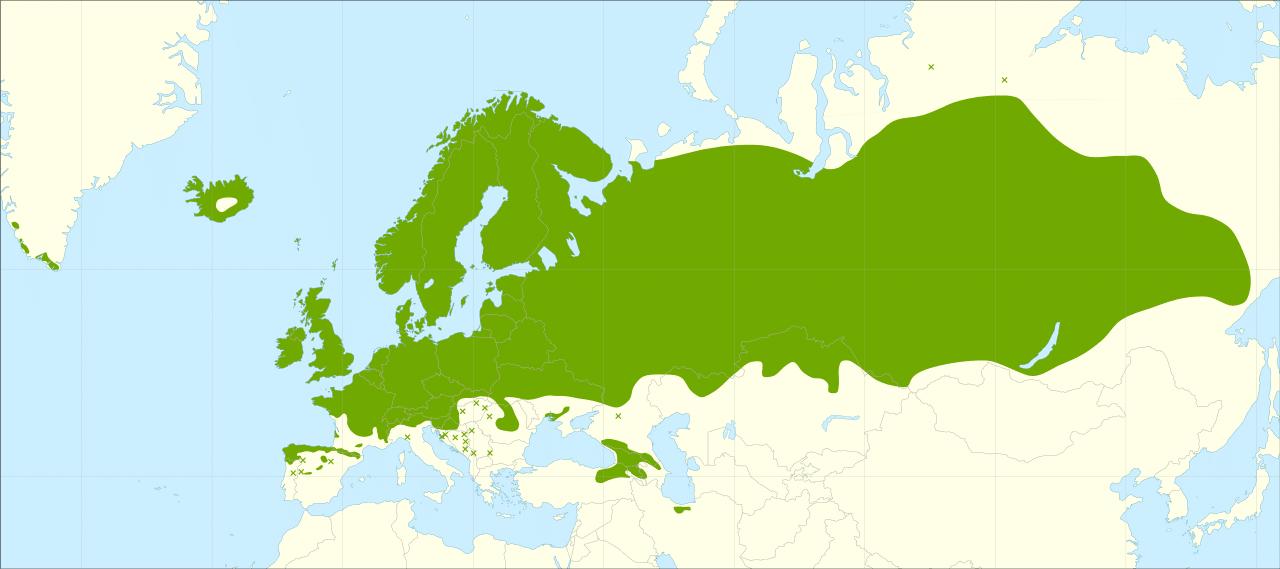 La Betula pubescens es un árbol con una distribución cosmopolita
