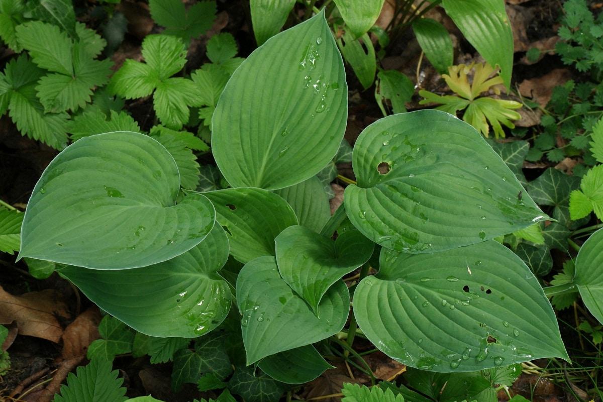 hojas verdes de planta llenas de rocio