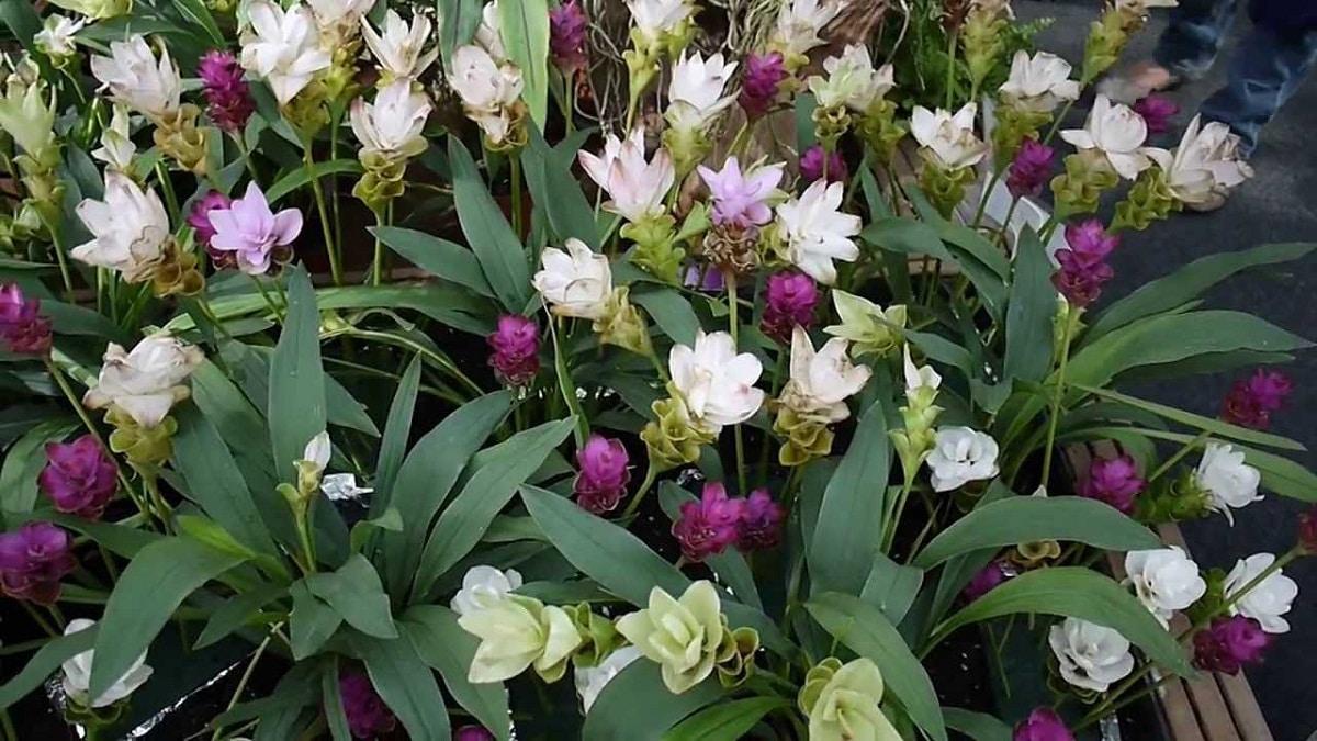 jardin lleno de flores de color rosa y blanco