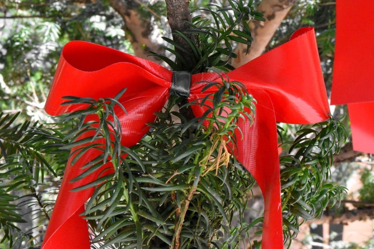 Decora tu hogar y jardín con plantas navideñas