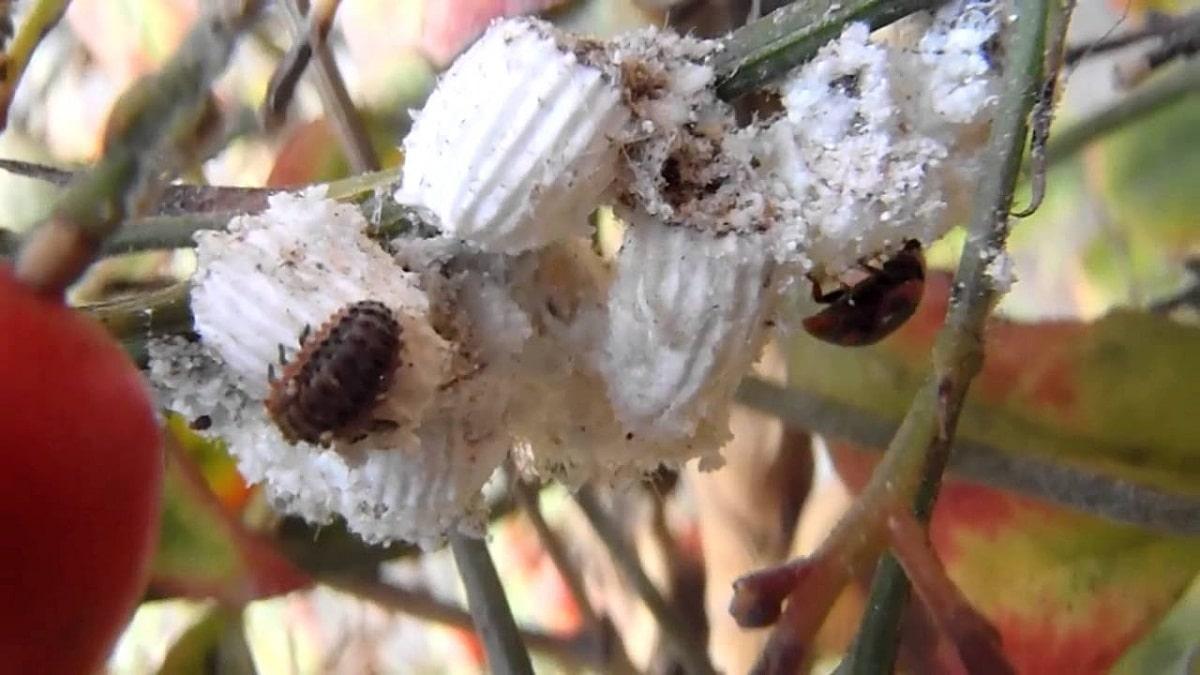 varios insectos en la rama de una planta