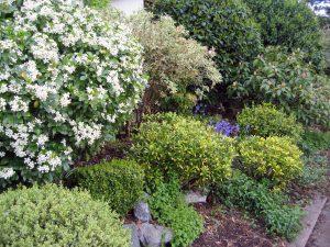 Los arbustos de jardín son plantas excepcionales