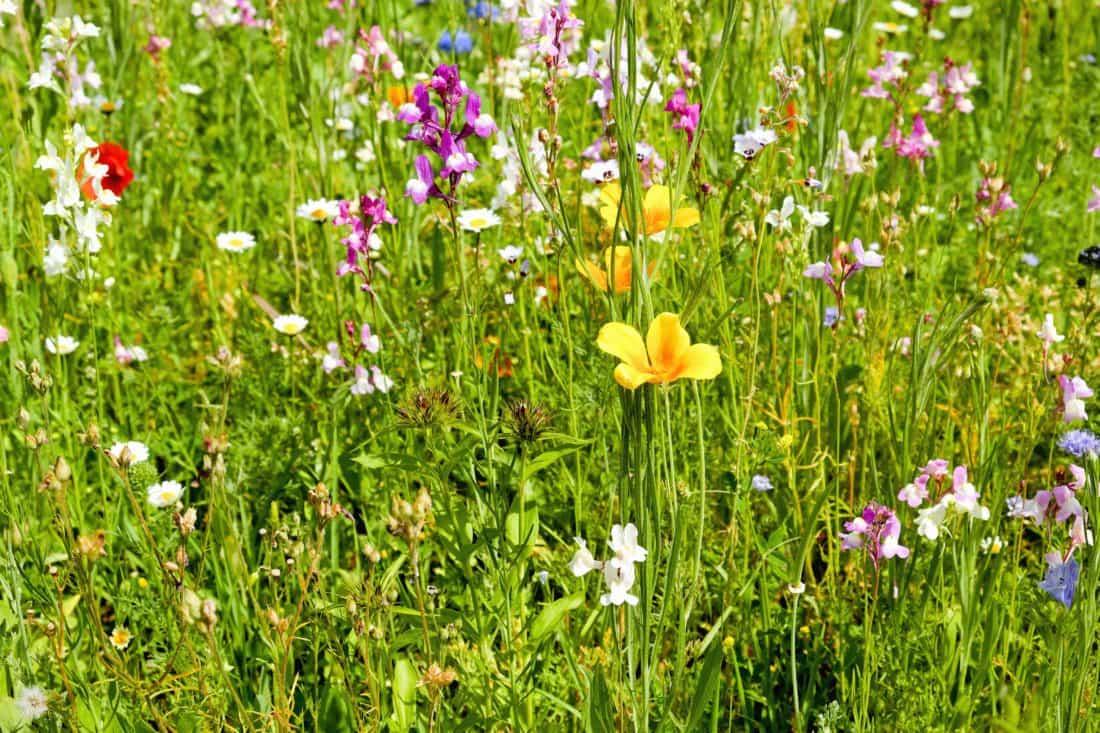 La hierba es la planta con más éxito