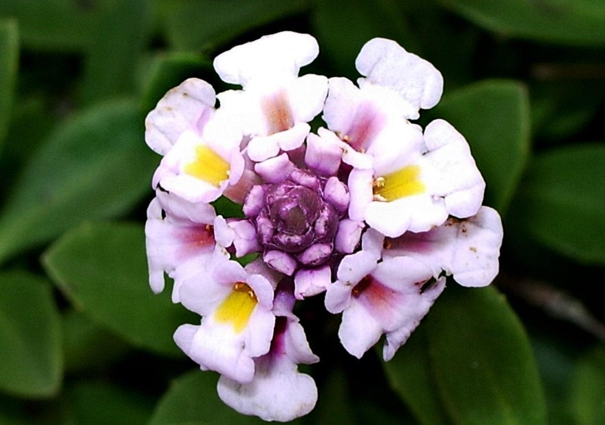 imagen de una flor de cerca donde se pueden ver todos sus petalos