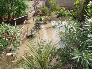 El exceso de agua por lluvia en un jardín causa problemas
