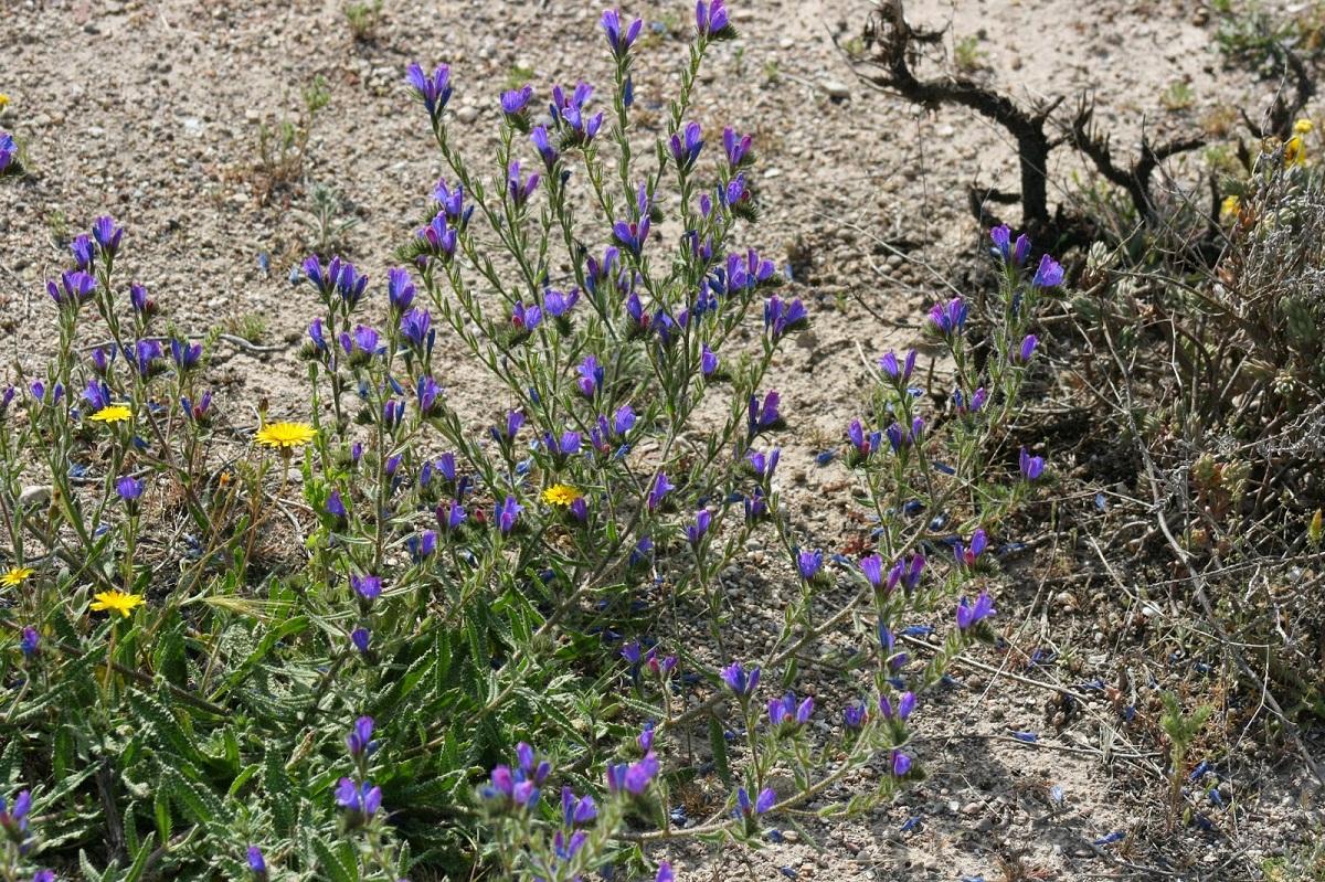 matorral con plantas de dos colores, amarillo, y morados