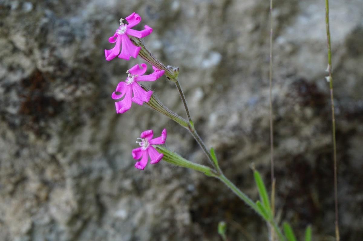 rama fina con tres flores de color rosa