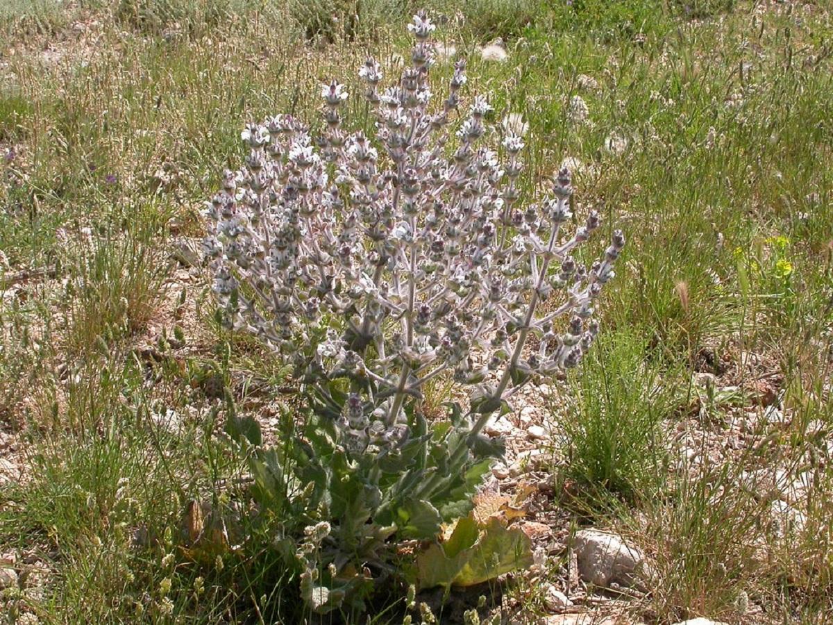 arbusto con flores muy facil de mantener