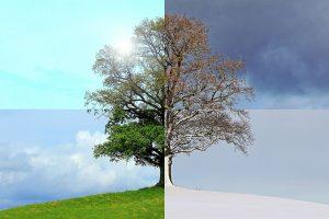 Los efectos de las estaciones del año son visibles en las plantas