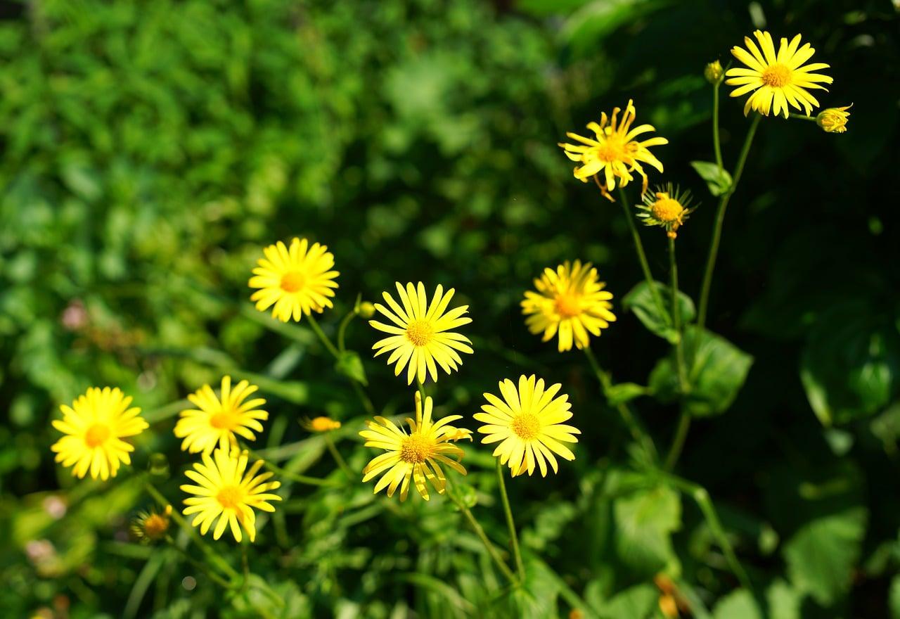 Las flores forman parte de casi todo tipo de jardines