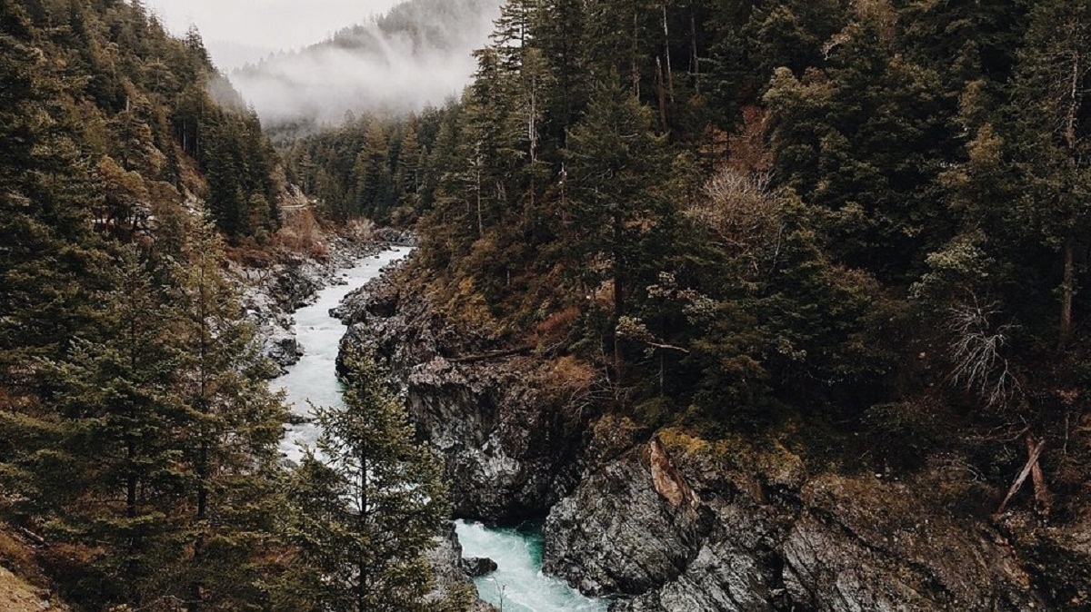 imagen del pino canadiense que rodea a todo el rio