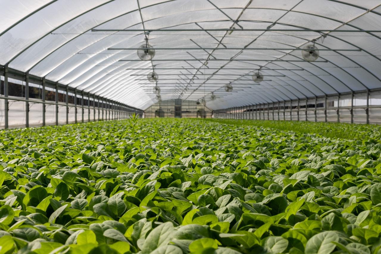 El invernadero con techo curvo son ideales para viveros