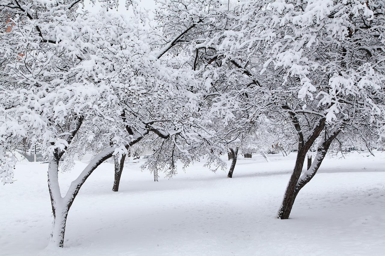 En invierno hay que proteger las plantas del frío