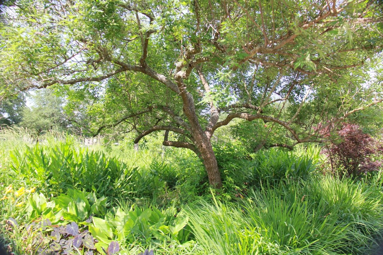 Un jardín natural protege a los animales