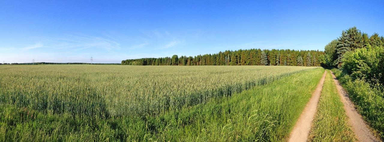 Vista de monocultivo de maíz