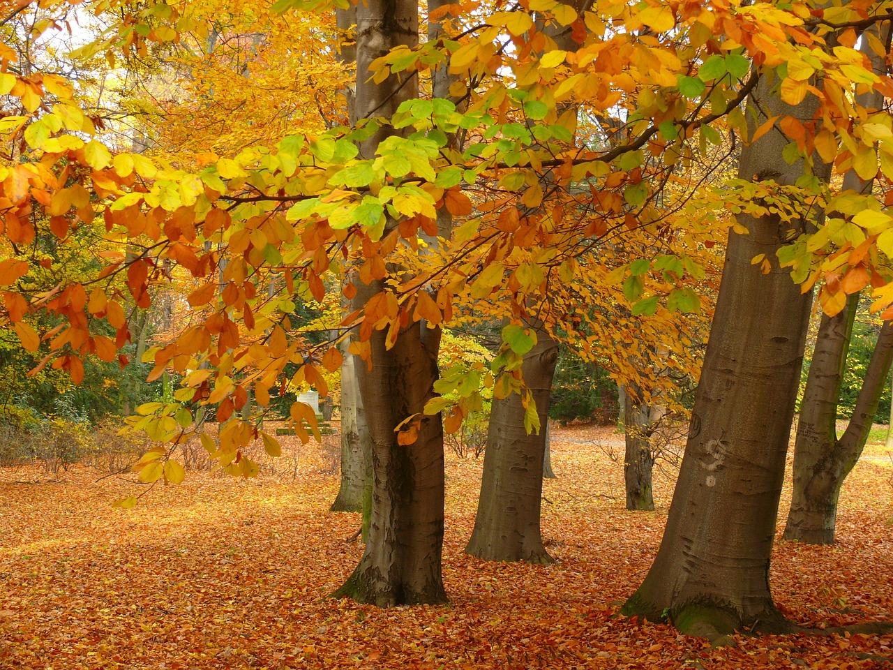 El otoño es una estación templada en el jardín