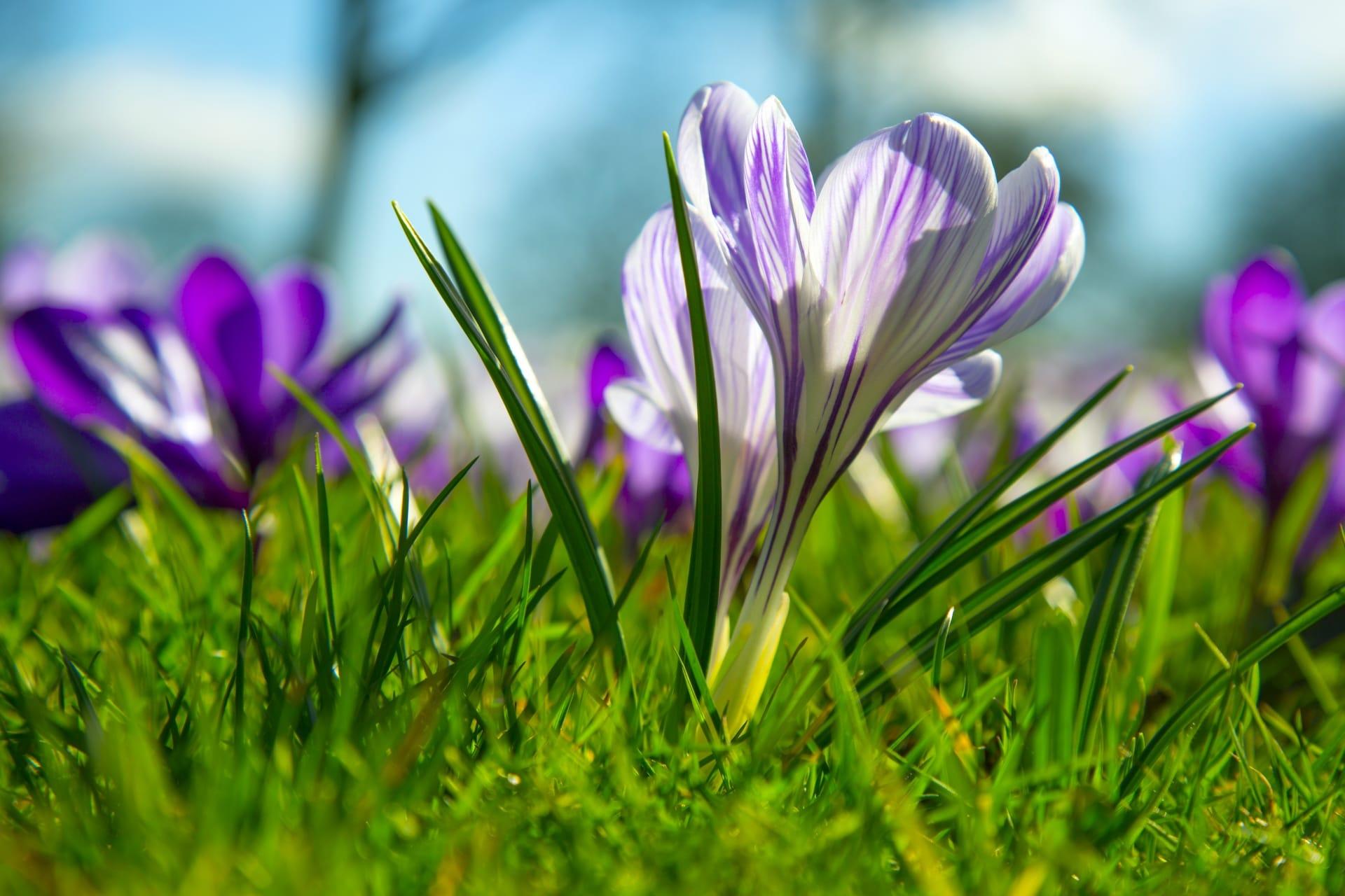 La primavera es la estación de las flores