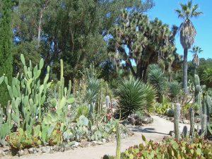 El xerojardín es un tipo de jardín de poca agua