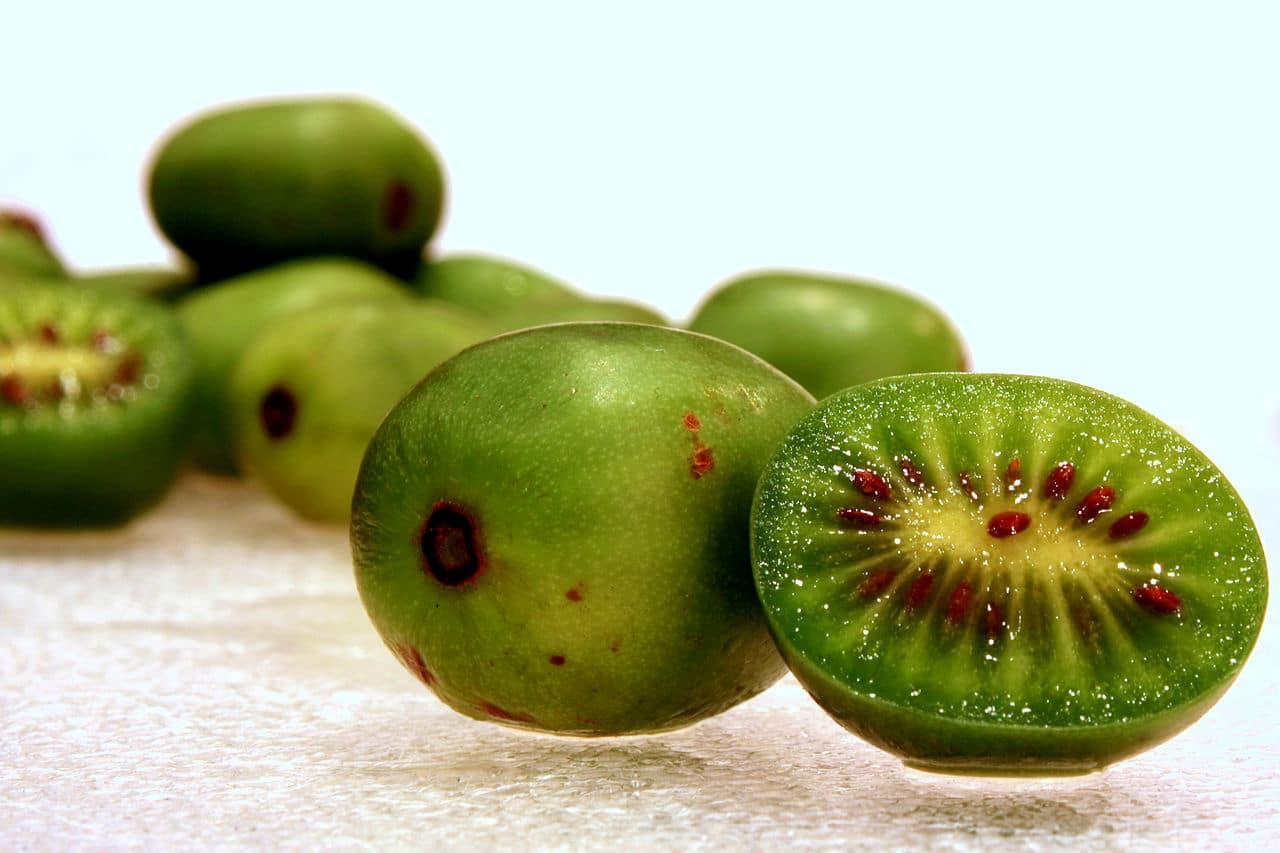 La Actinidia arguta es una planta resistente a las heladas