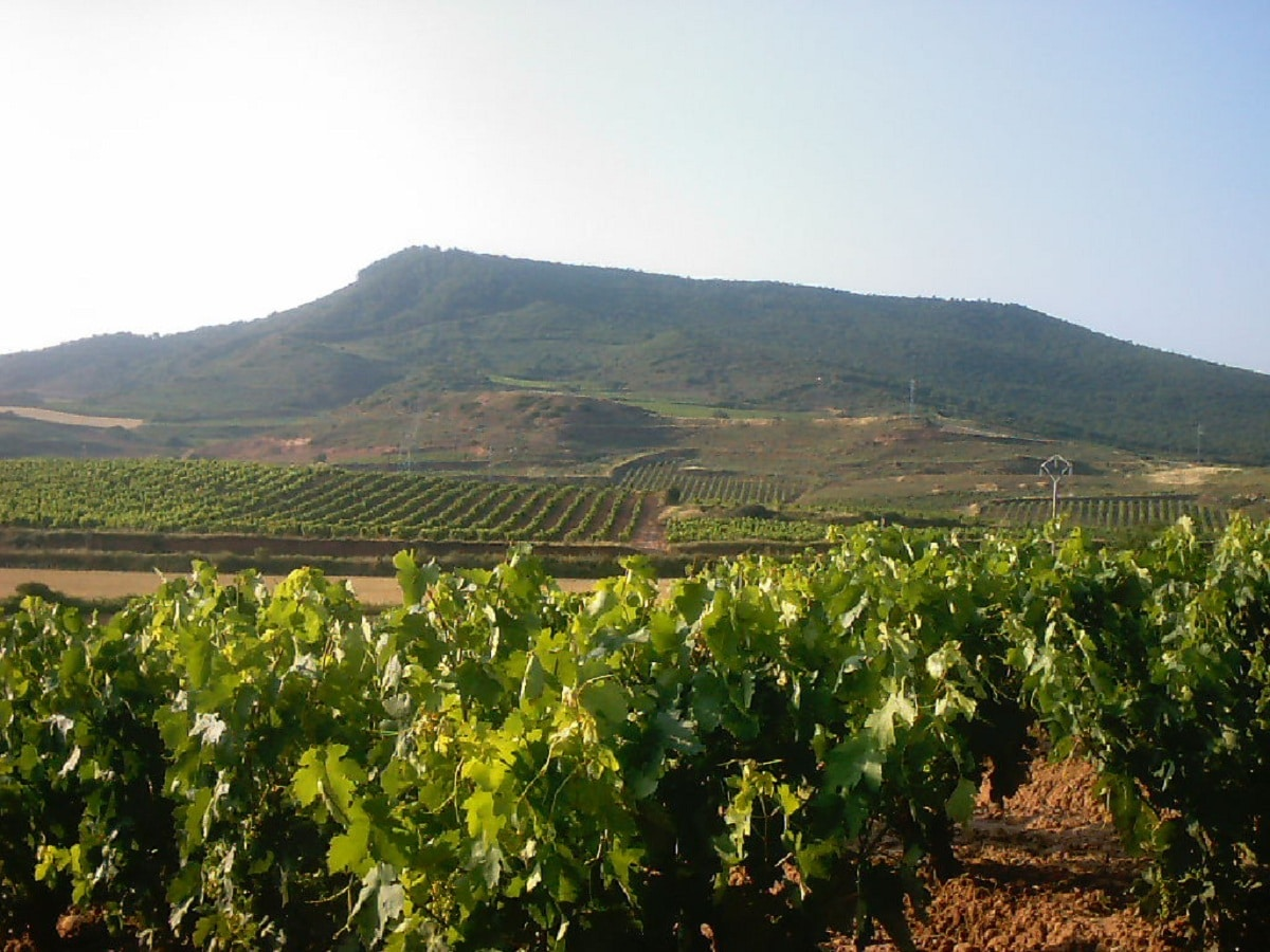 Agricultura extensiva España