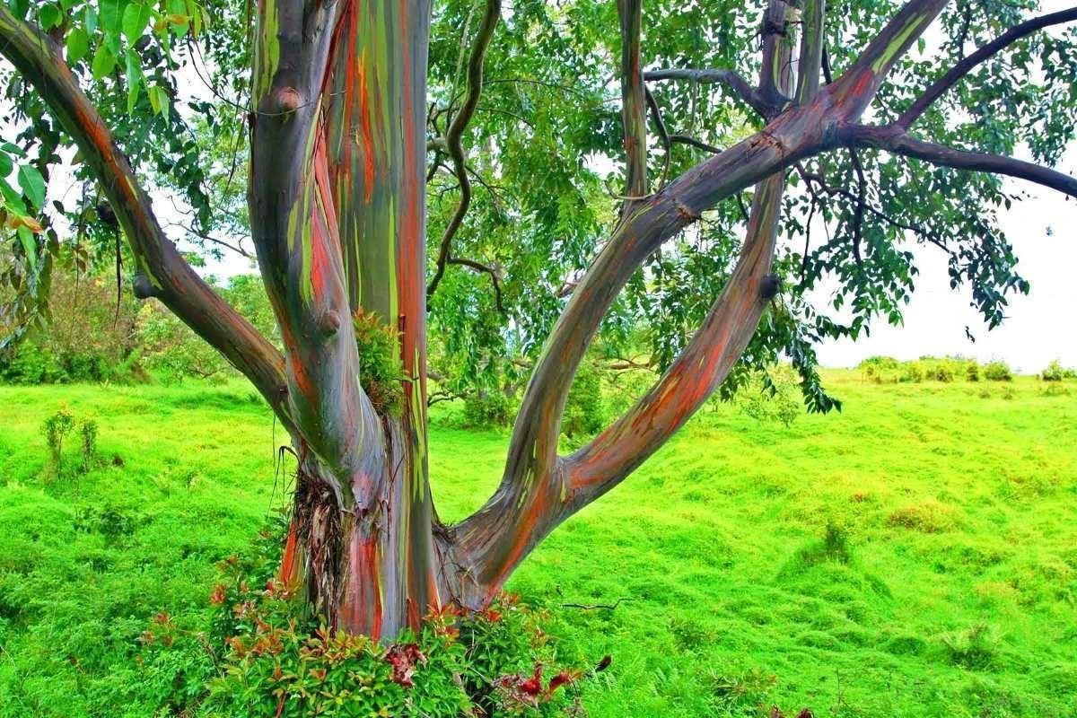 arbol con tronco de diferentes colores que llaman la atencion
